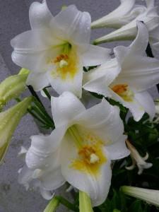 IMGP2645 4月の花